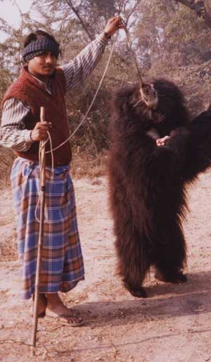 Bear & Trainer