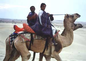 Camel Riders in Thar Desert