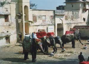 Elephant Taxis, Jaipur