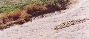 Goat Herding, The Alpujarra