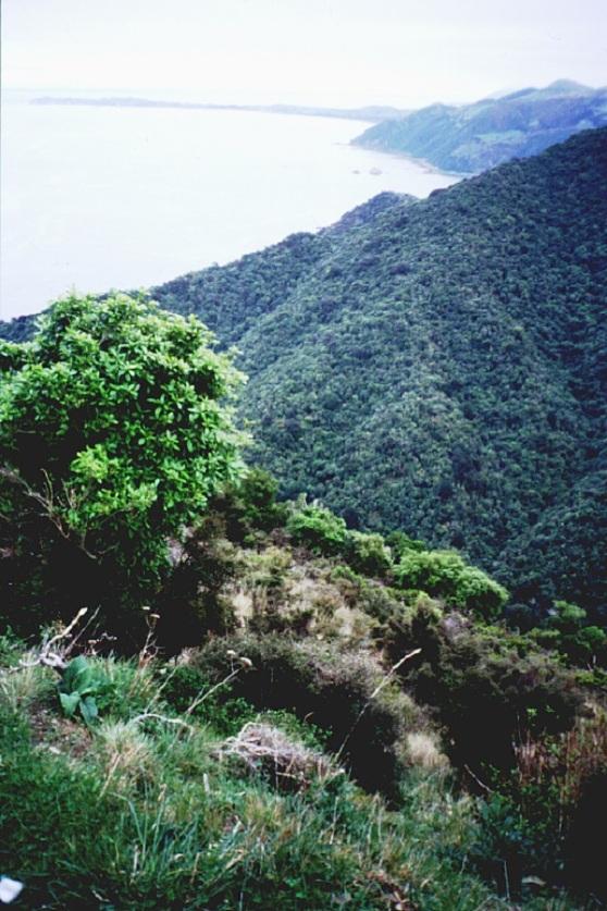 NZ Kaikoura Coast