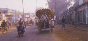 Oxen & Cart