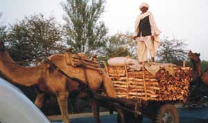 Rajasthani Traffic