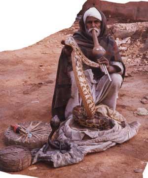 Sikh Snake Charmer