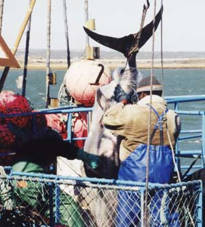 Commercial Fishing, Spain