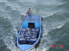 Fish Transport, Vietnam