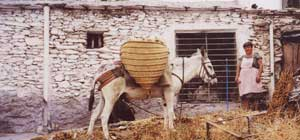 Working Mule, The Alpujarra