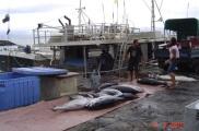 Wet Market Apia - Fresh Tuna June 2012