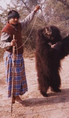Trainer & Bear - India