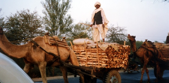 Working camels & carts - India