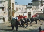 Elephant Taxi - India