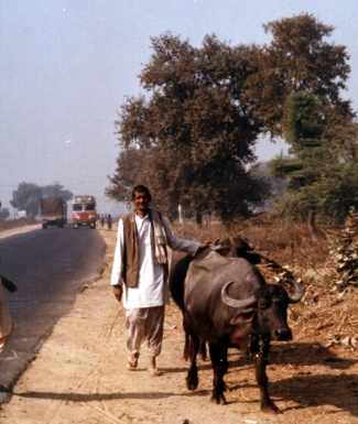 Farmer & water buffalo - India