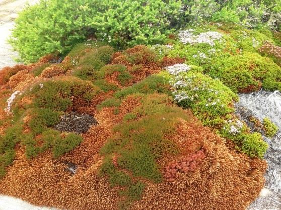 Vibrant coastal flora