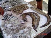Maroc Larache - assorted seafood - eels, sardines, prawns, anchoas, bream, sole, octopodes