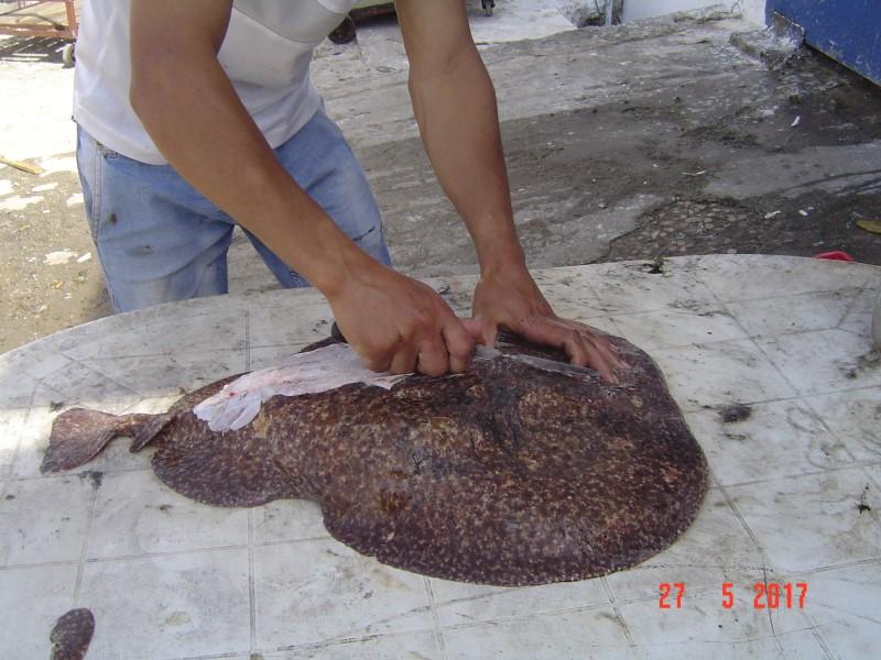 Maroc M'diq - skinning fish