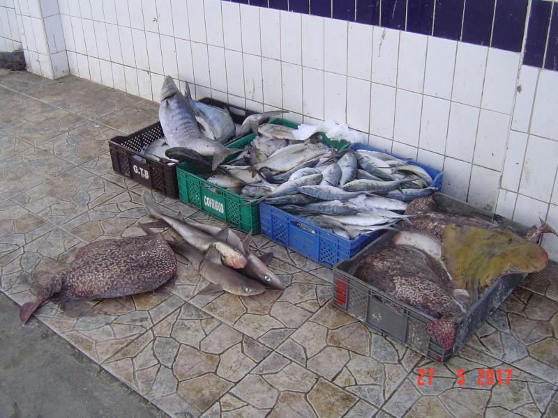 Maroc M'diq - local catch of the day