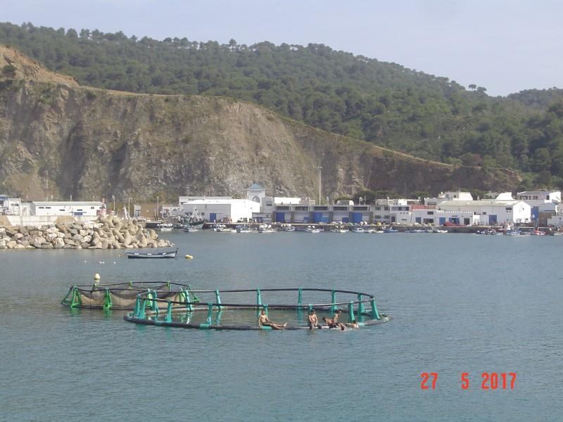 Maroc M'diq aqua fishing