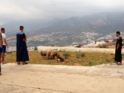 Maroc Tetouan - sheep watching
