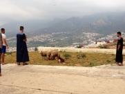 Maroc Tetouan - sheep watching