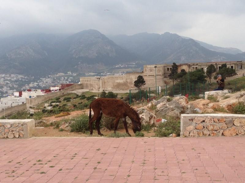 Maroc Tetouan - upper village view