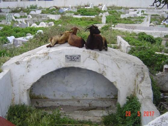 Maroc Tetouan - goat cemetery