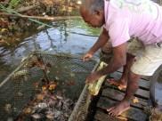 Local aquaculture - Negombo