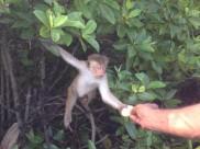 Monkey Island - Negombo Lagoon