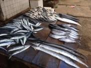 Assorted fish - southern coast Sri Lanka