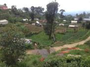 Haputale - workers' village