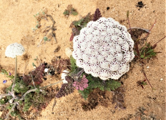 Coastal plants - their beauty a surprise