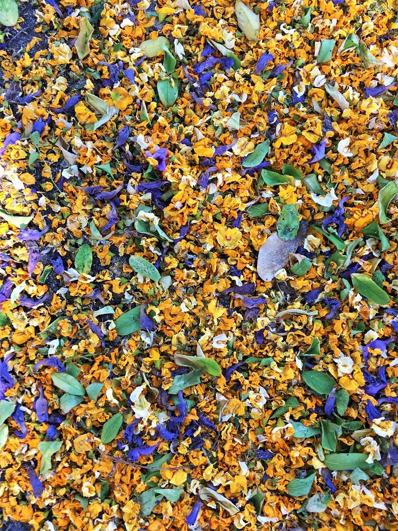 A carpet of petals bedecks the side-walk