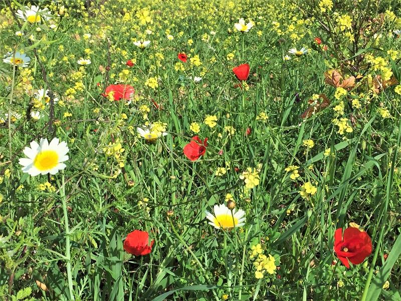 Weeds 'n wildflowers